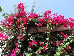 Floride paysage fleuri