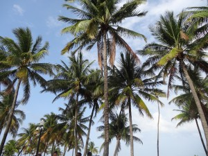 Floride palmiers